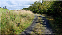 J4681 : Lane, Crawfordsburn by Albert Bridge
