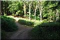 TQ0148 : The North Downs Way / Pilgrims' Way, Chantry Wood by N Chadwick