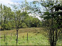 SJ8958 : Selectus land behind Uplands Mill by Jonathan Kington