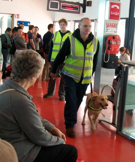An Custaim na hEireann/Irish Customs sniffer dog team operating at Terminal 1