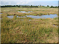 TM4974 : Saline lagoons in Walberswick National Nature Reserve by Evelyn Simak