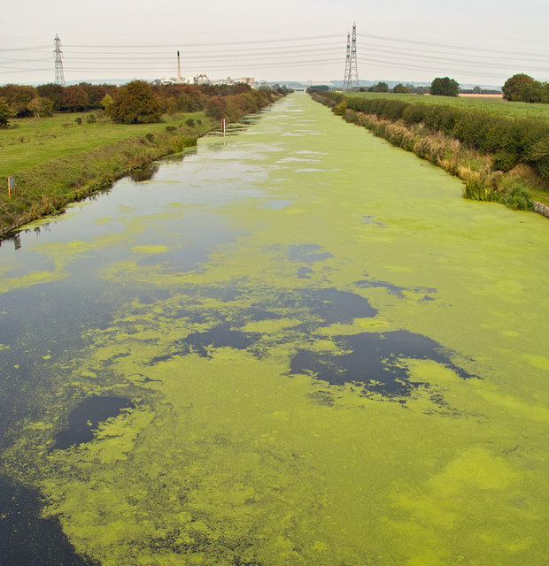 Duckweed on the New River Ancholme