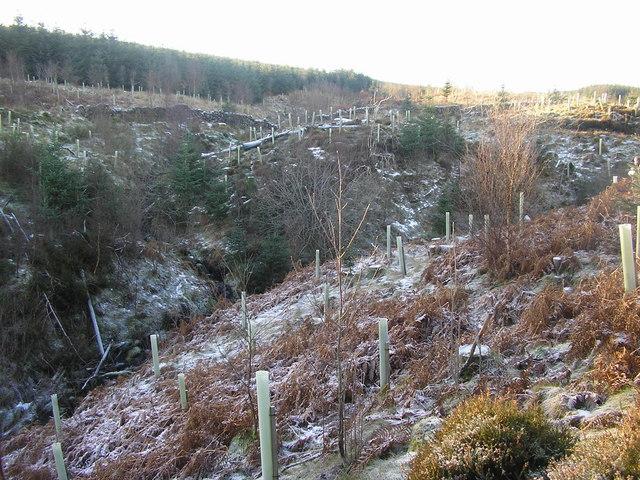 Confluence of burns on Speddoch Hill