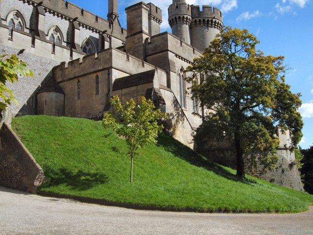 Trees in front of Arundel Castle