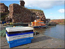 NT6779 : Coastal East Lothian : The Usual Suspects at Victoria Harbour, Dunbar by Richard West