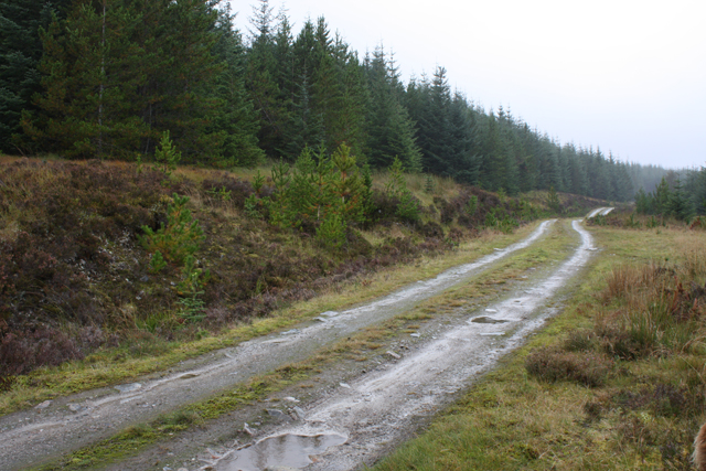 Track in Overscaig Plantation