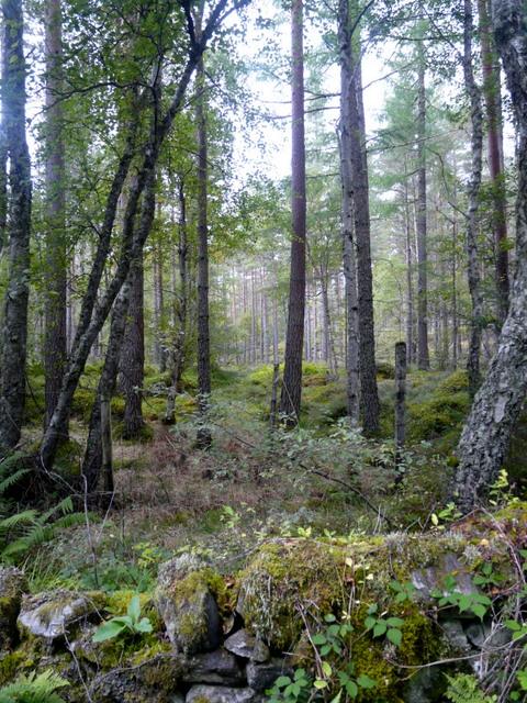 Woodland near Achnasoul