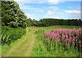 NO0100 : Track to Lendrick Muir woodland by William Starkey
