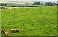 J4772 : Cattle near Newtownards by Albert Bridge
