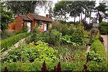 SJ7243 : Vegetable garden at Bridgemere by Steve Daniels