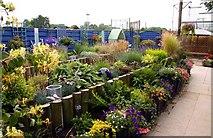 SJ7243 : The Sensuary Garden by Steve Daniels