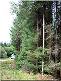 NN0450 : Edge of the forest, Barnamuc, Glen Creran by Karl and Ali
