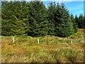 G9198 : Tree area, Meenachuit by Kenneth  Allen