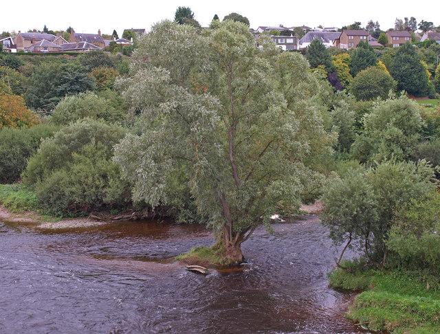 Tree, River Tweed