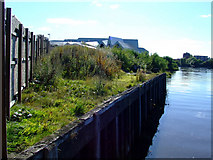 NS5566 : River Kelvin by Thomas Nugent