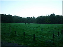 TA0816 : A picnic area near Wootton, taken at dawn by Ian S
