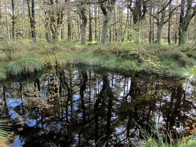 Dark pool, Beanley Moss