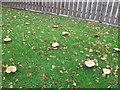 NZ4532 : Fungi, Elwick by Alex McGregor