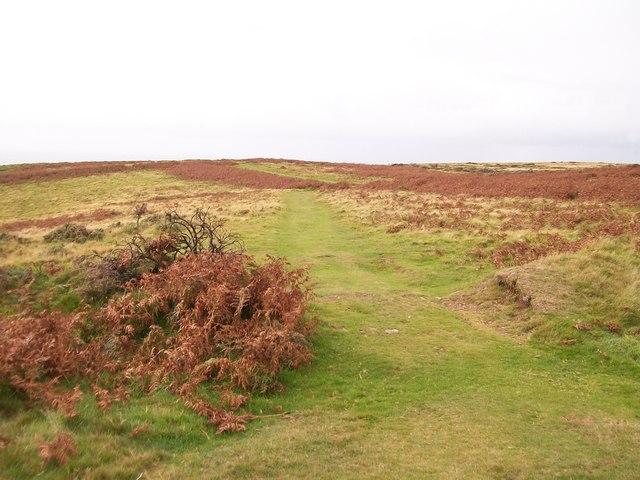 The Llyn Coastal Path on the cliff top east of Trwyn Cilan