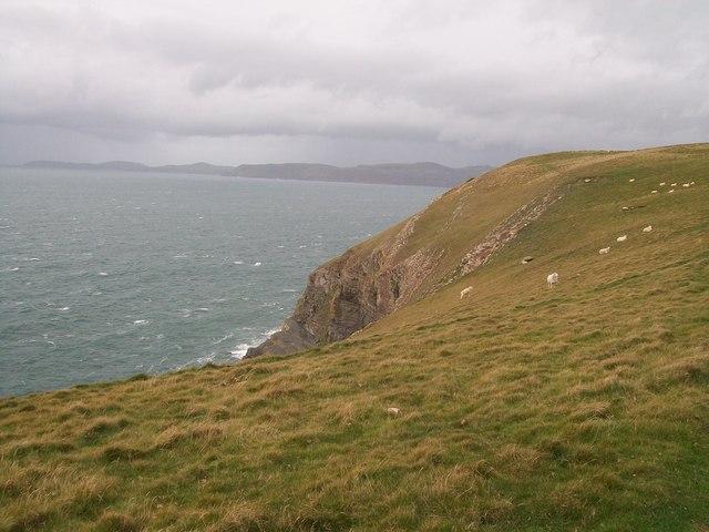 Sheep on the cliff tops south of Trwyn y Fulfran