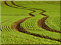 TA1538 : Tractor Tyre Marks in a Field by Andy Beecroft