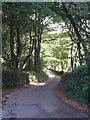 SW5236 : The road between Higher Hill Wood and Lower Hill Wood by Rod Allday