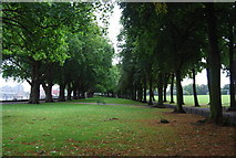 TQ2475 : Avenue of trees, Wandsworth Park by N Chadwick