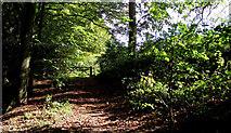 SJ8959 : Lower entrance to the pasture by Jonathan Kington