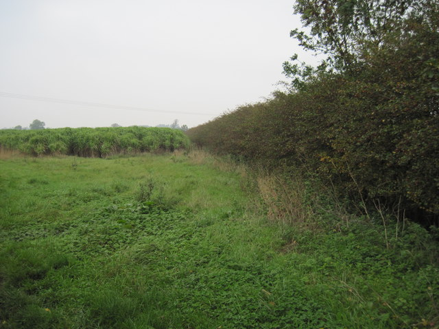 Bio  crop  and  field  edge