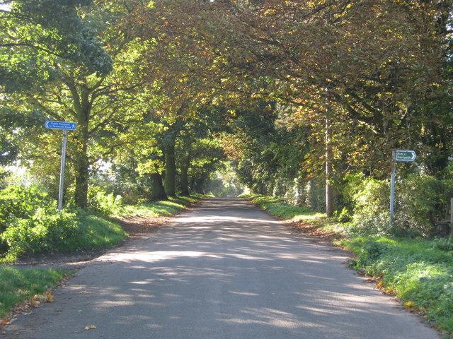 Autumnal walk along Fox Hill Road