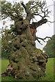 NZ2130 : Ancient Oak, Auckland Park by Mick Garratt