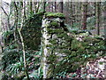 SM9624 : Ruin in the woods by ceridwen