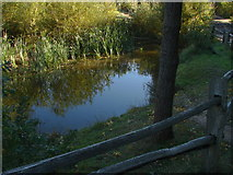 TQ1362 : Esher Common by Alan Hunt
