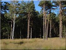 TQ1361 : Esher Common by Alan Hunt