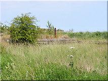 TM4598 : Remains of a loading dock near Haddiscoe station by Glen Denny
