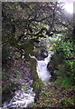 NY2225 : Comb Beck by Simon Leatherdale