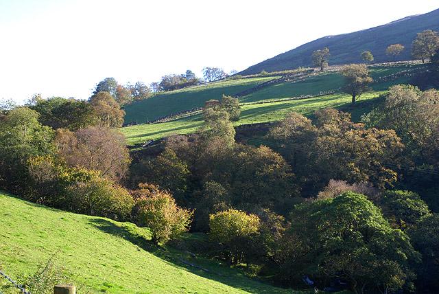 Field above the Afon Twrch