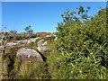 B8304 : Rocky ground, Derryhenny by Kenneth  Allen