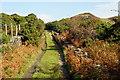 SH6337 : Track at Llandecwyn, Gwynedd by Peter Trimming