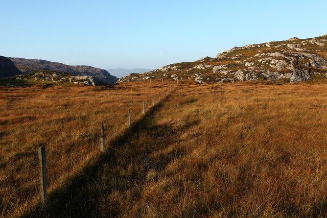 Sheep grazing fencing