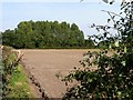 TG0402 : Ploughed field and trees by James Allan