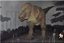 TQ2679 : London : Kensington - Natural History Museum T-Rex by Lewis Clarke