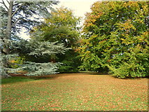 TQ1352 : Part of the grounds north east of the house, Polesden Lacey by pam fray