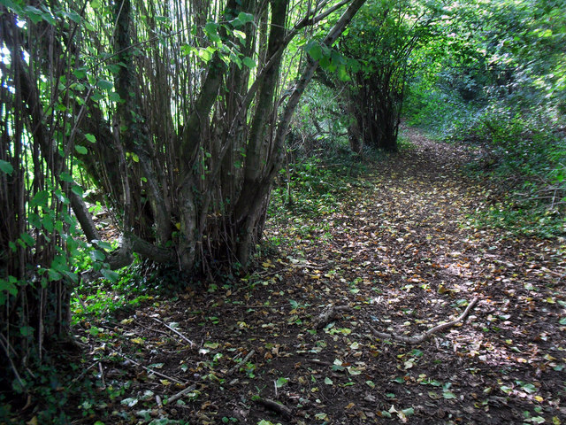 Track with Old Coppice