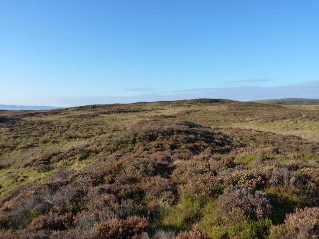 The summit 'ridge' of Foel Dinas