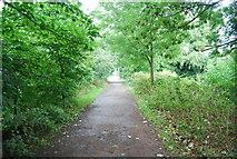 TQ1776 : Thames Path along Syon Reach by N Chadwick