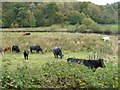 NY3503 : Fertile pasture land by the River Brathay by Keith Salvesen
