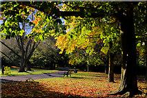 J3472 : Ormeau Park, Belfast (13) by Albert Bridge
