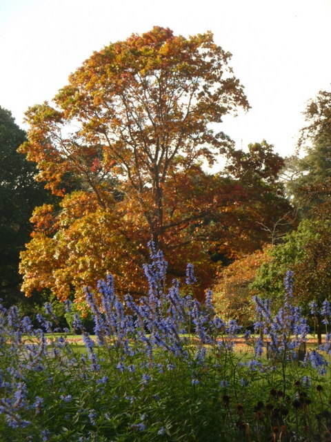 Exbury: blue and autumn colours by Chris Downer