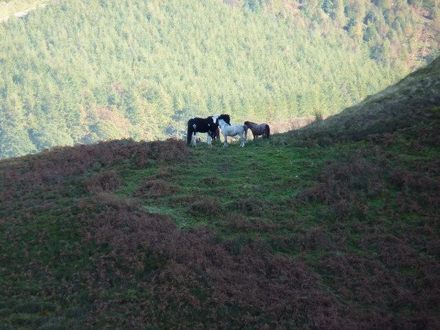 Horses on the side of Maen Du